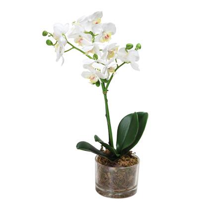 Altıncı Cadde Saksılı Orkide Beyaz 47Cm