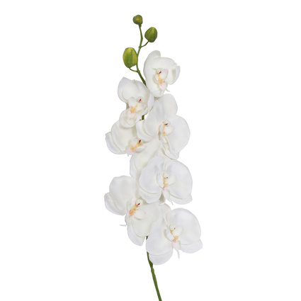 Altıncı Cadde Orkide Dal Beyaz