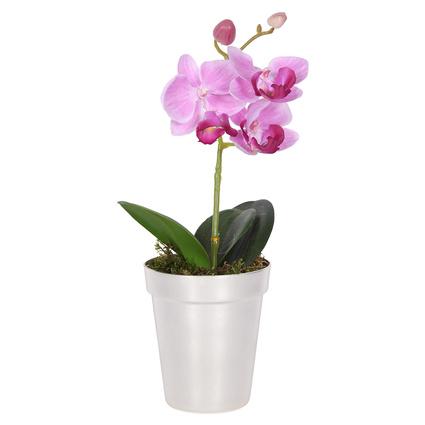 altinci cadde tekdal orkide pink dkcd