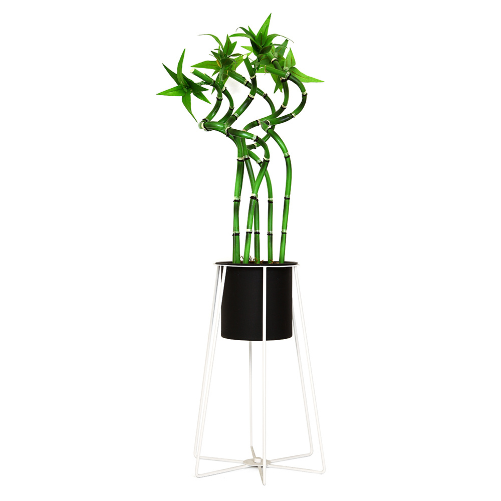 Bambu Aranjmanlı Wired Büyük Beyaz Standlı Siyah Saksı
